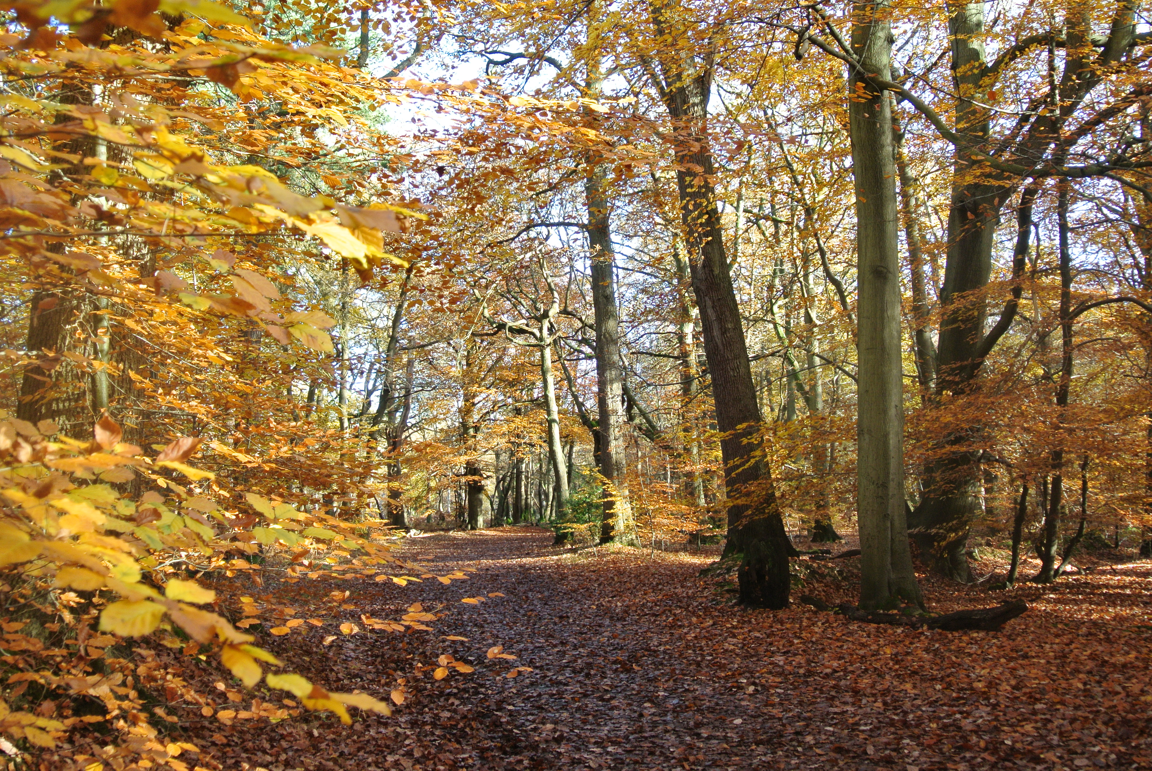 A walk at burnham beeches southbourne gardens - Autumn plowing time all set for winter ...